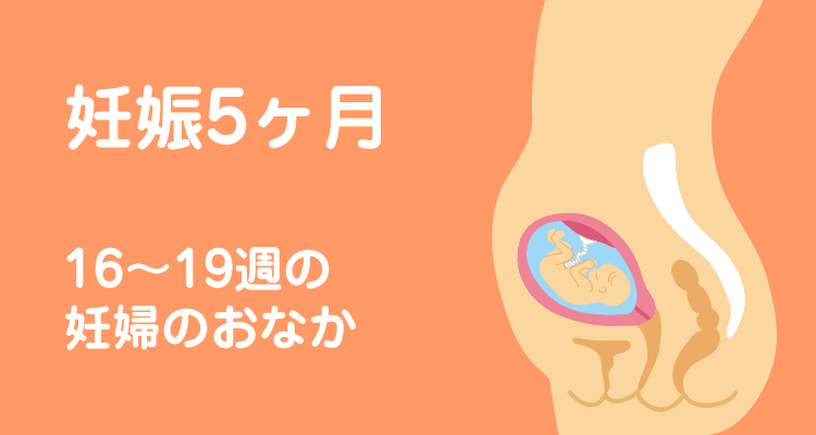 お腹 妊娠 5 カ月